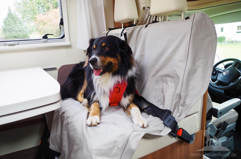 So kann man dem Hund die Bewegungsfreiheit geben, die man selbst möchte.