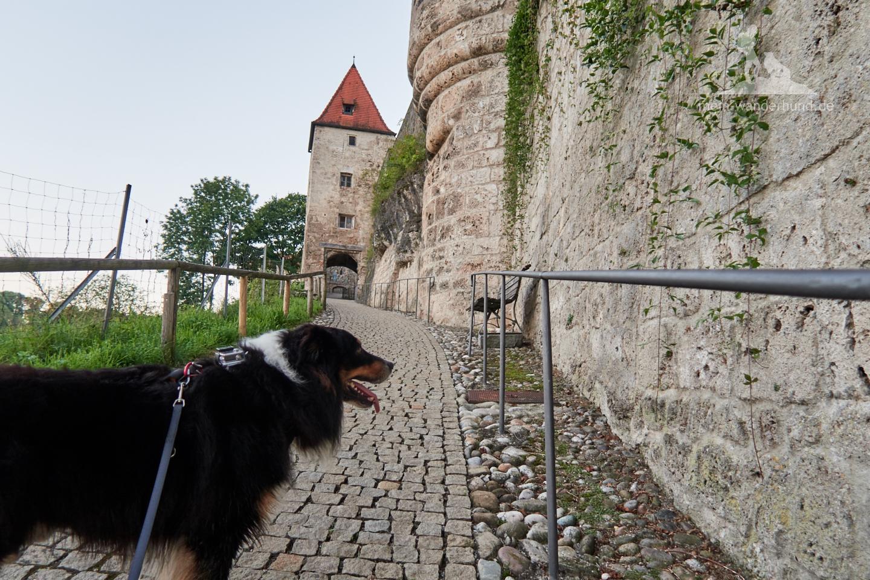Einer der Wege zur Burg.