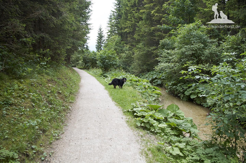 ... später am Kranzbach zurück.
