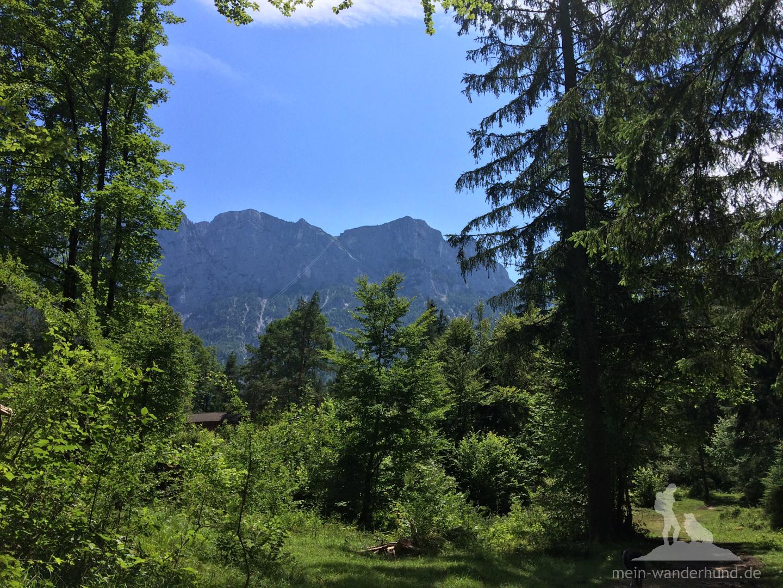 Beim Rückweg: Blick auf die Reiteralpe ...