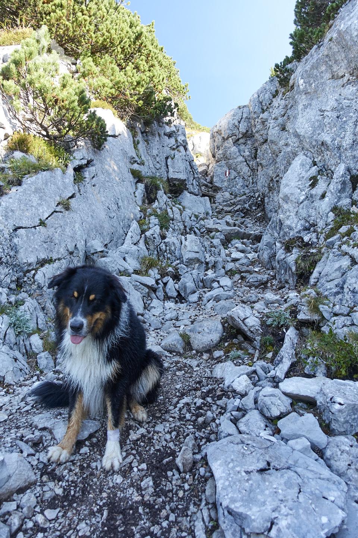 Wandern mit Hund Seehorn: Vor der Felsrinne.