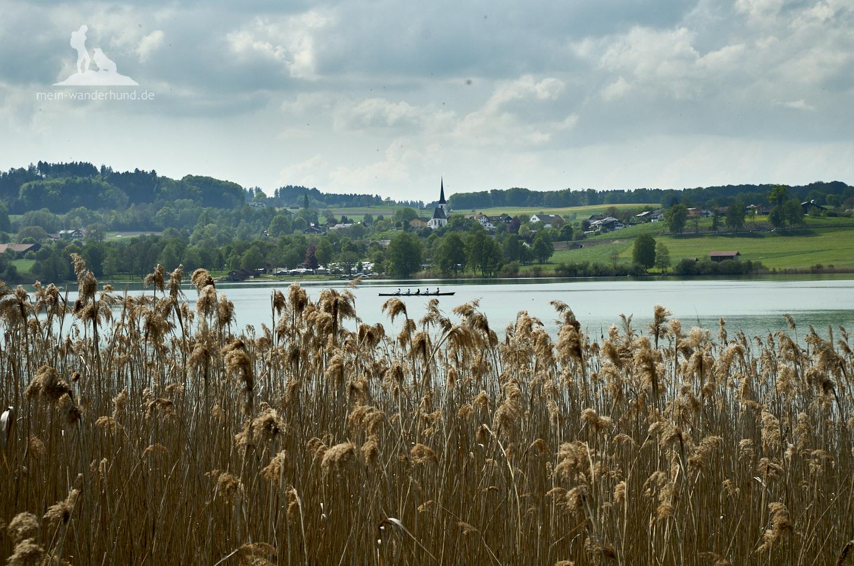 Wanderung mit Hund am Tachinger See im Chiemgau.