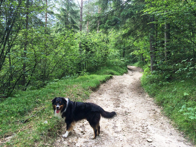 Zunächst führt die Wanderung durch einen Wald ...