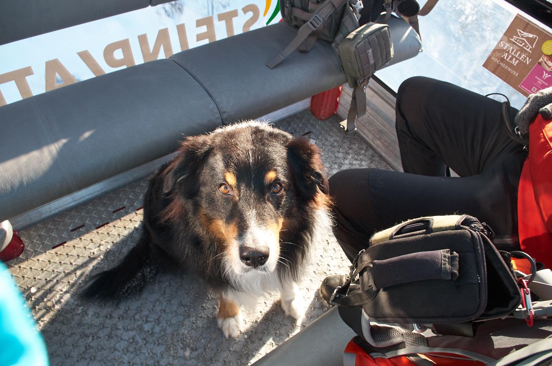Mit Hund in der Gondel.