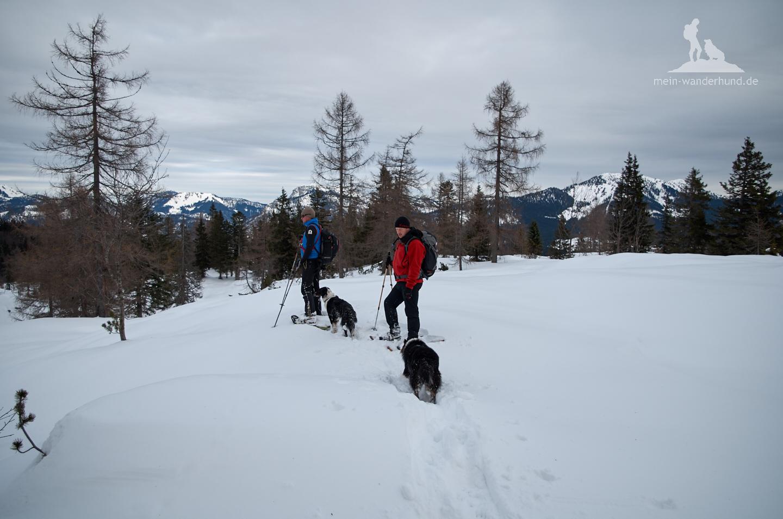 Macht Spaß: Schneeschuhwandern mit Hund