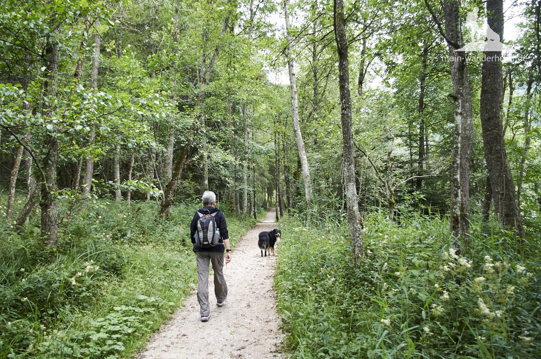 Durch Wälder geht es hinab ...
