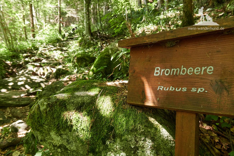 Im Wald gibt es sogar einen botanischen Lehrpfad.