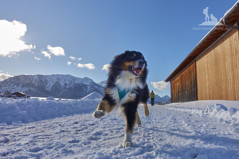 Winter Wanderung Inzell: Ari hat Spaß!