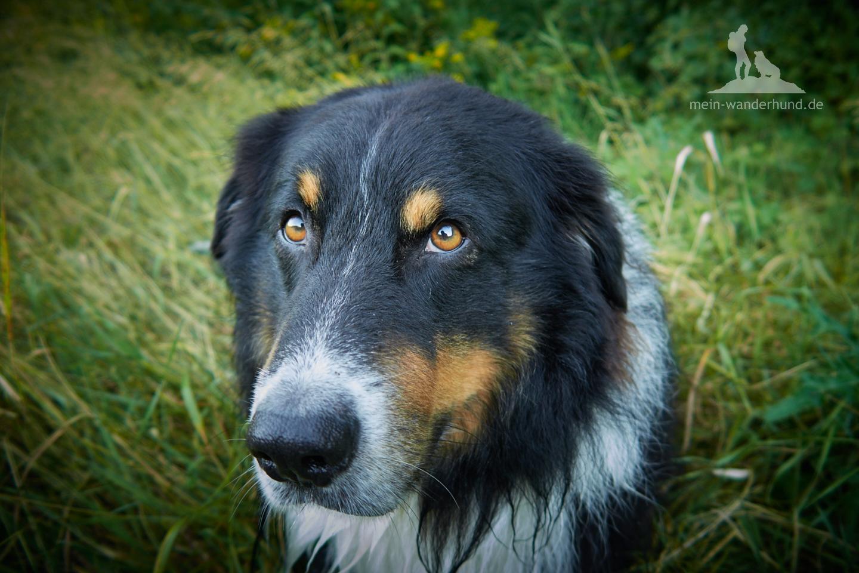... und wenn der Hund mag - auch fotografieren ;-)