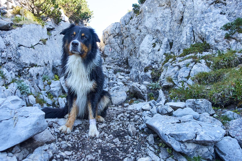 Wandern mit Hund Seehorn: Leichte Kletterei für Hunde.