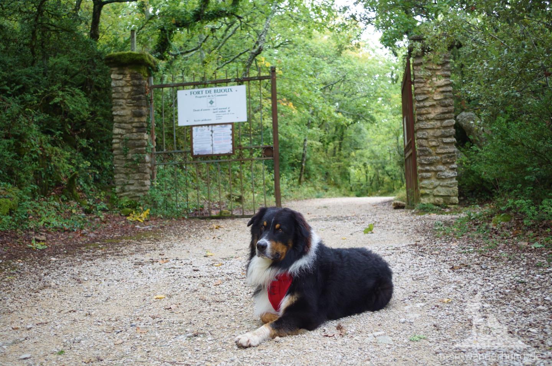 """""""Wachhund"""" Ari vor dem Eisentor des Forts."""