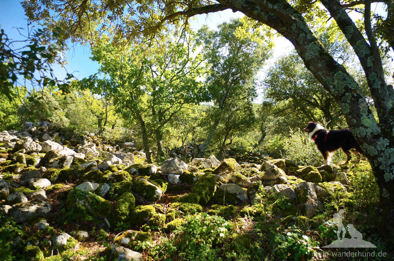 Wild-romantische Atmosphäre mit moosbewachsenen, alten Mauerblöcken.