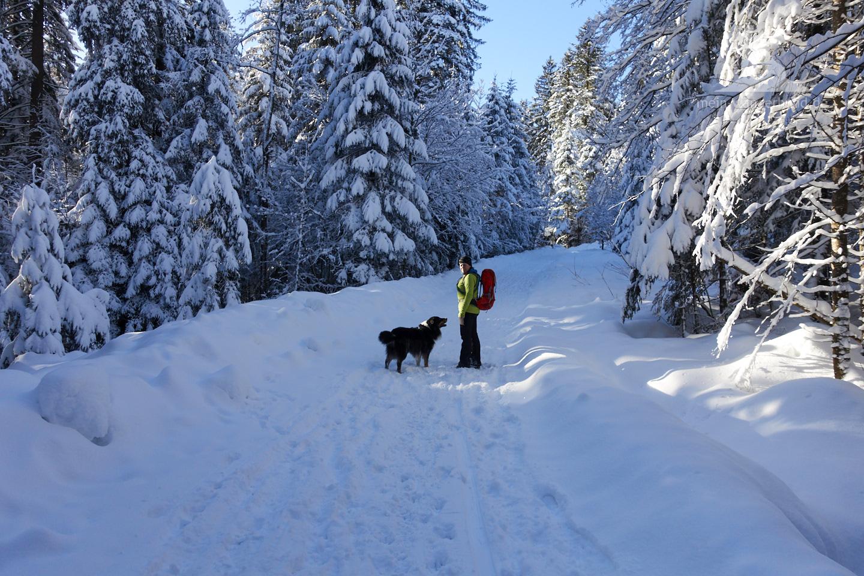 Winter Wanderung Inzell: Beim Aufstieg durch den Winter-Wald