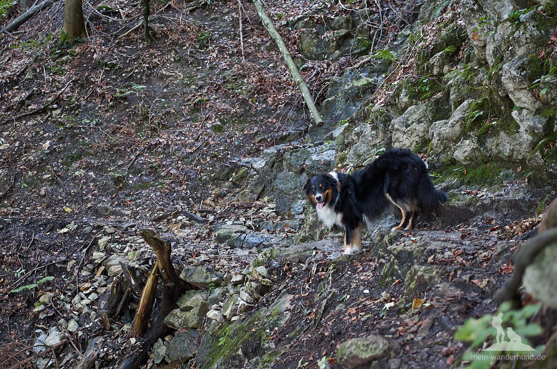 Ari findet den abwechslungsreichen Steig durch den Wald toll.