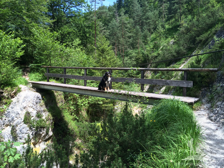... und hohe Brücken ...