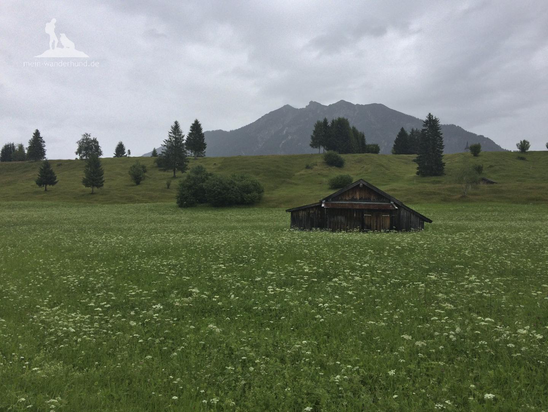 Buckelwiesenwanderung bei Krün