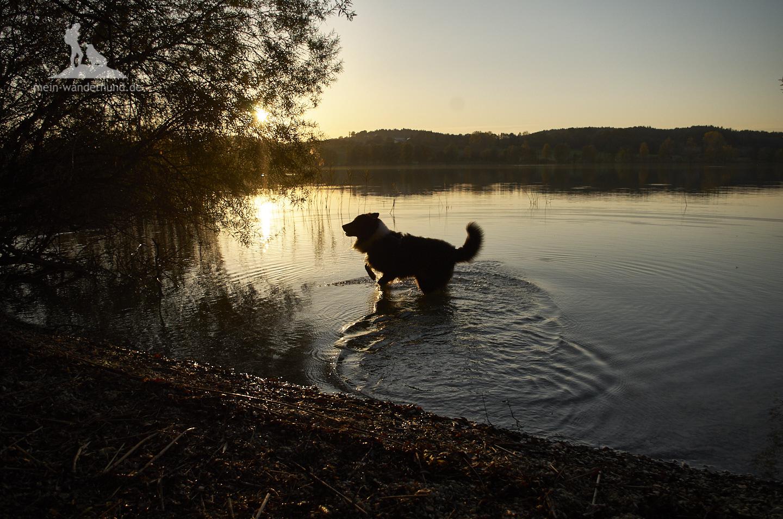 Wanderung mit Hund am Tachinger See im Chiemgau: Sonnenuntergang am See.