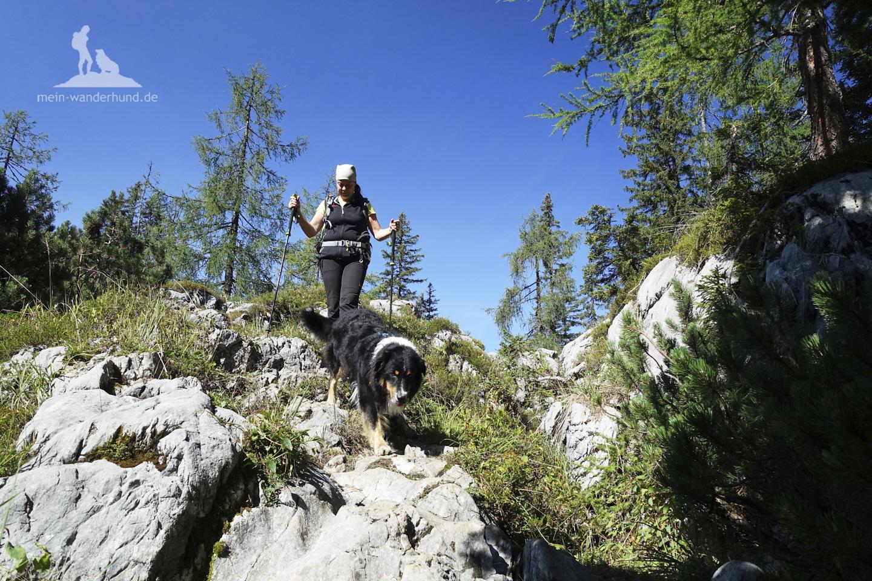 Wandern mit Hund Seehorn: im auf und ab über Wurzeln und Fels.