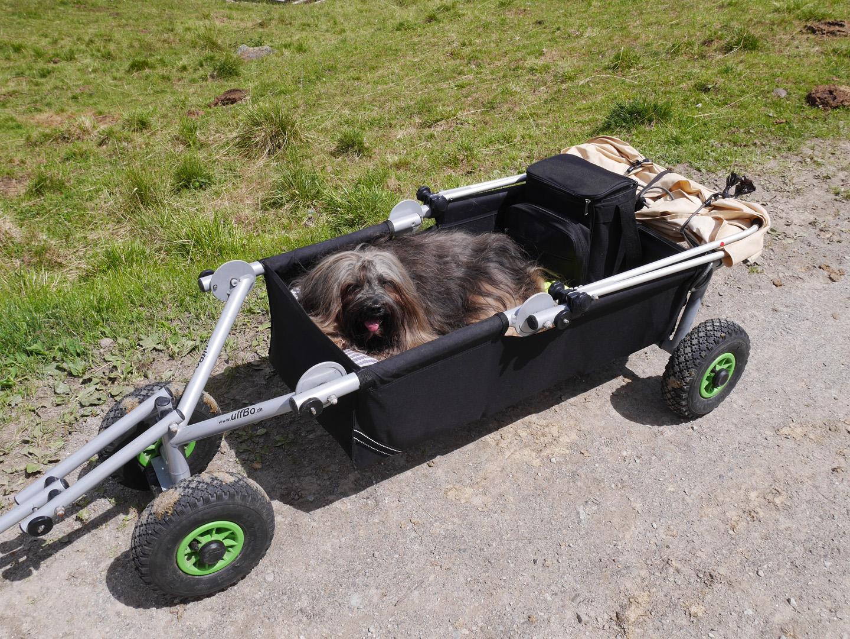 Mika liebt ihren eigenen Bollerwagen.