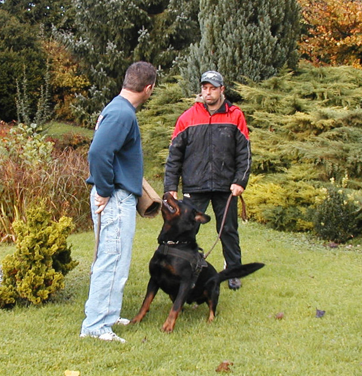 John Bernard working Unkas vom Hause Neubrand, a few days after winning the Deutscher Meisterschaft. Handler behind Unkas is friend and breeder Oliver Neubrand.
