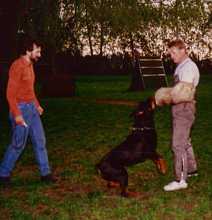 John Bernard working with Danjo vom Schwaiger Wappen when Danjo was 14 months old. Handler of Danjo is Walter Sonntag, and owner at that time was friend and breeder Xaver Meixner.
