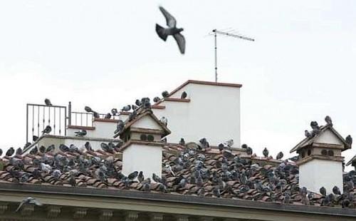 Metodi per allontanare i piccioni dal tetto di una casa