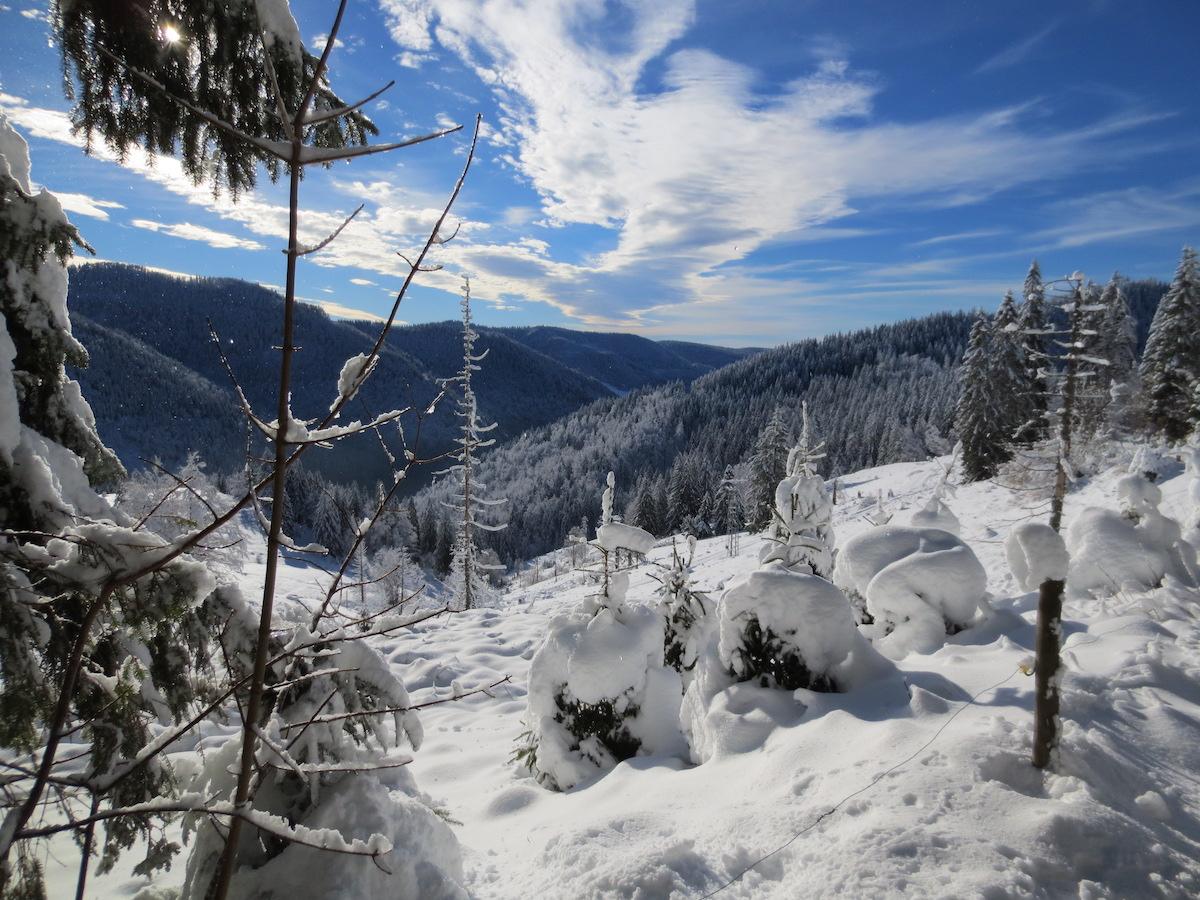 Winter am Präger Boden im Schwarzwald