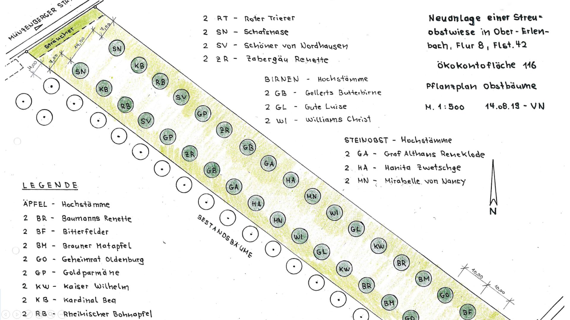 Skizze zur Bepflanzung der Fläche