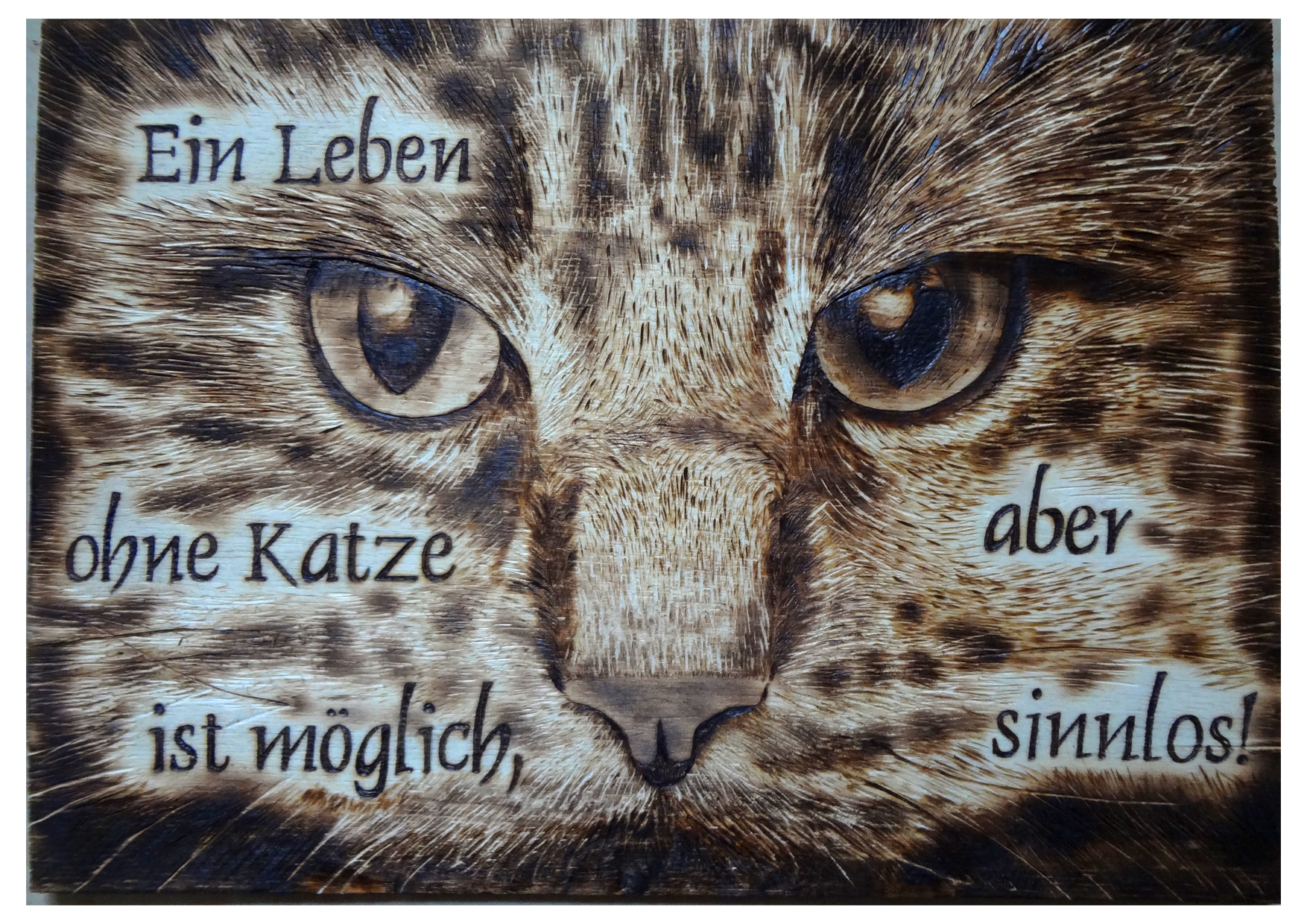 Katzenportrait mit Spruch