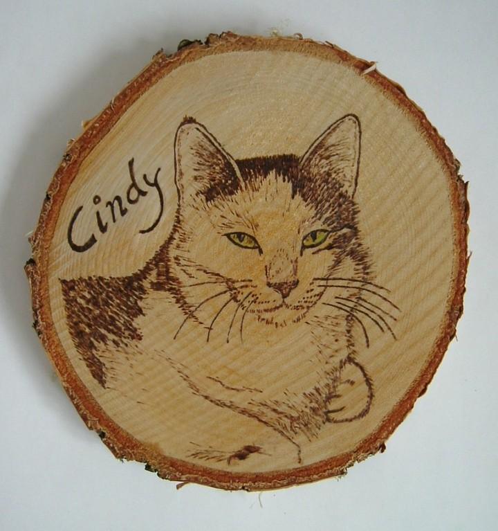 Katze Cindy auf einer mittleren runden Baumscheibe