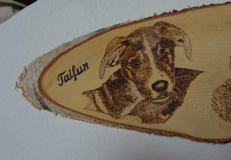 """Hund """"Taifun"""" auf einer großen Birkenscheibe"""