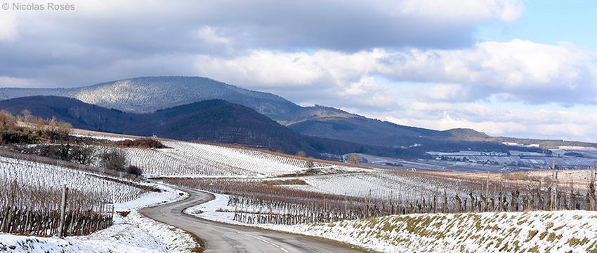 Vignes blanches Alsace Nicolas Rosès Photographe