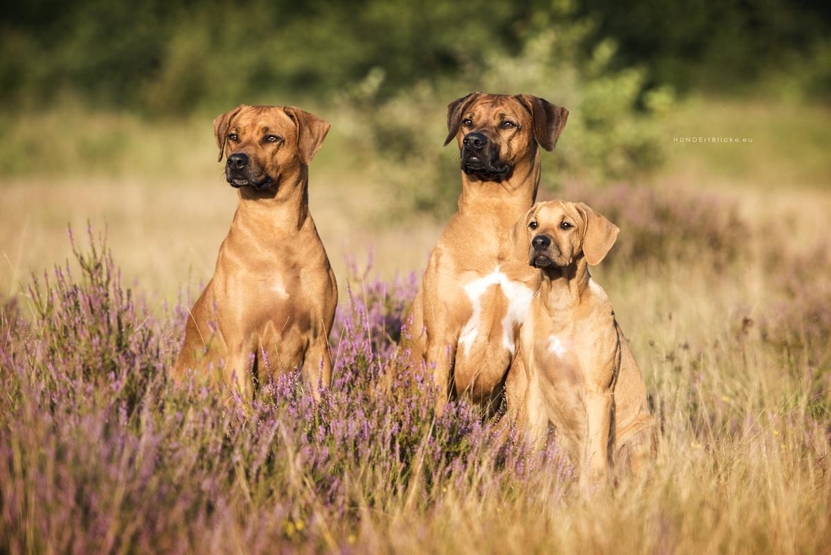 © Karin van Klaveren - www.KvK-Fotografie.de