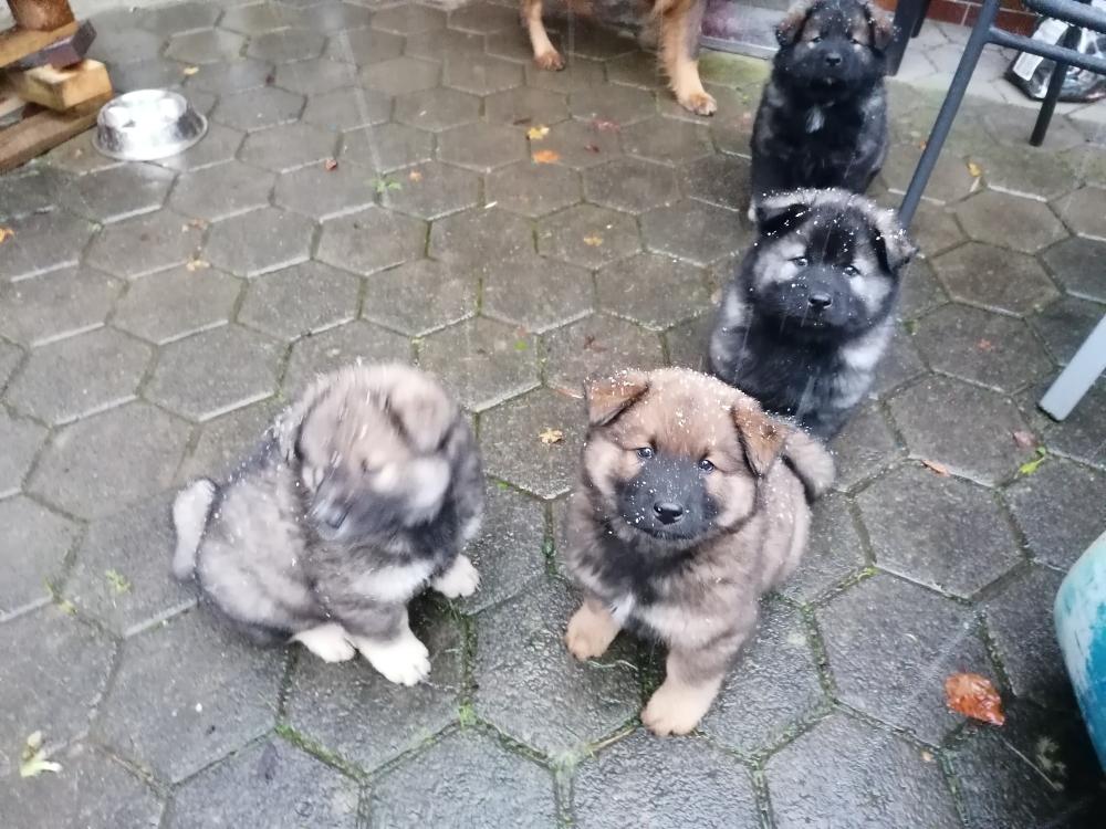 Aero, Arthur und Atilla