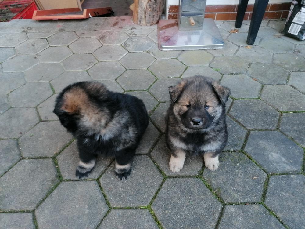 Arkos und Aro
