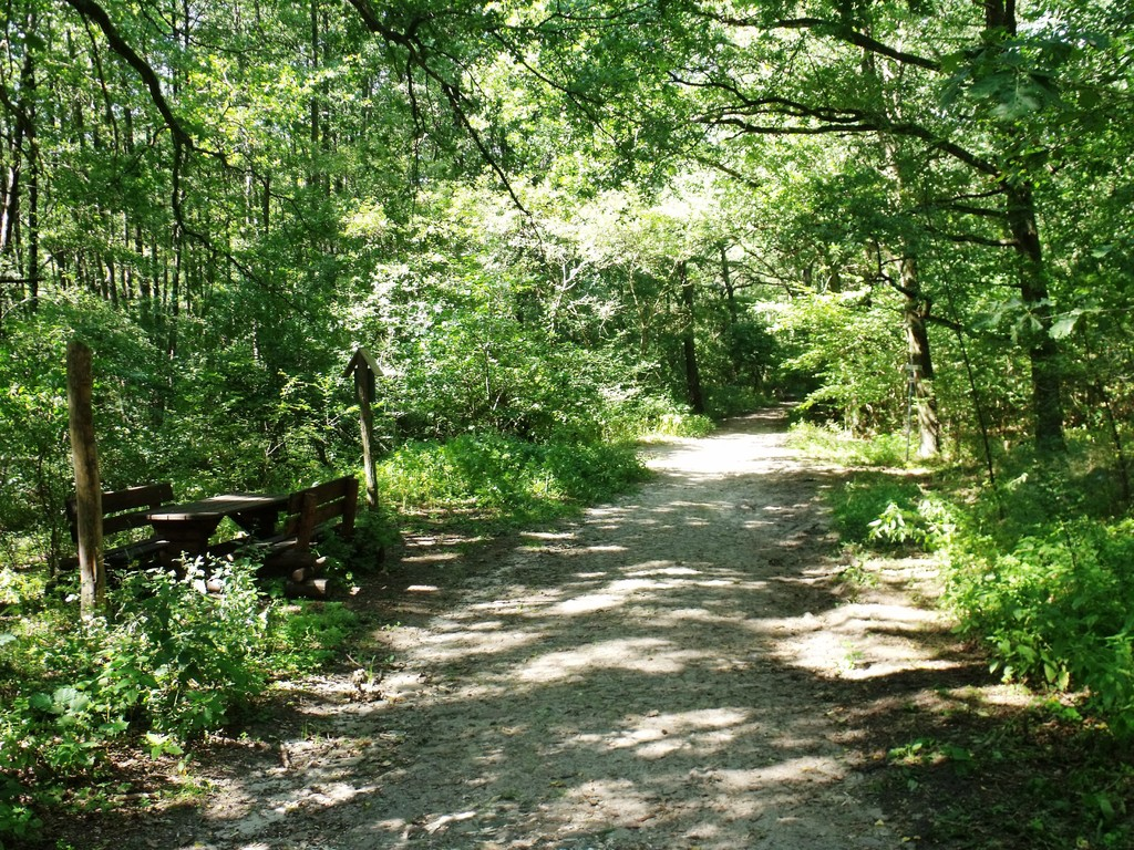 Waldweg von Strausberg