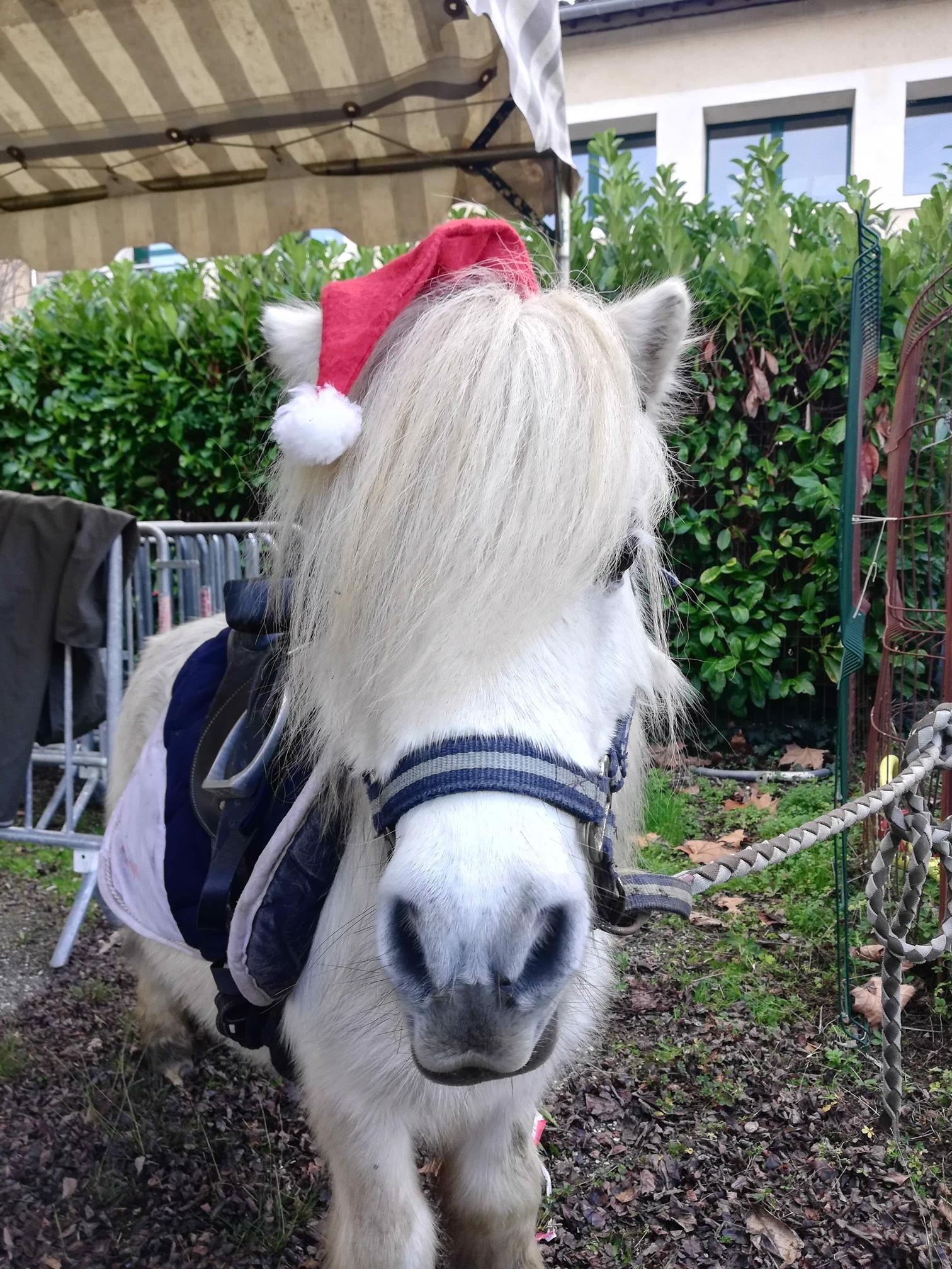 Flash au marché de Noël
