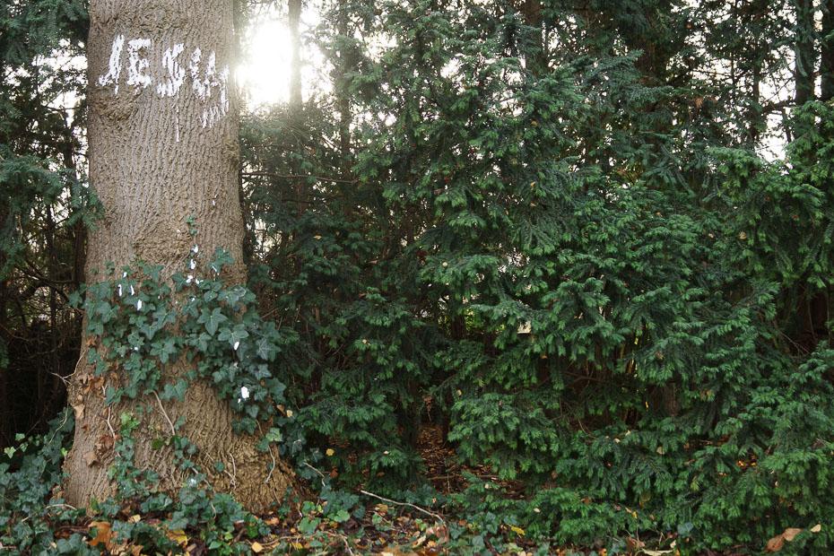 Jesus-Graffiti an einem Baum in der Nähe des Paulinums in Münster