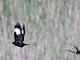 5月29日(月)練習62回目 南港野鳥園