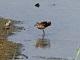 8月30日(水)練習69回目 南港野鳥園