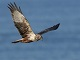 11月27日・月練習89回目 南港野鳥園