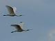 12月9日(土)練習94回目 南港野鳥園