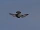 12月1日(金)練習91回目 南港野鳥園