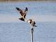 10月9日(月)練習75回目 南港野鳥園