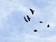 12月5日(火)練習93回目 南港野鳥園