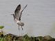 9月26日(火)練習73回目 南港野鳥園