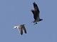 11月16日・木練習85回目 南港野鳥園