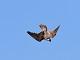 12月12日・火練習95回目 南港野鳥園