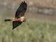10月26日・木練習80回目 南港野鳥園