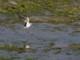 5月25日(木)練習61回目 南港野鳥園